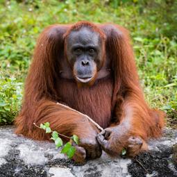 進化と痔の関係